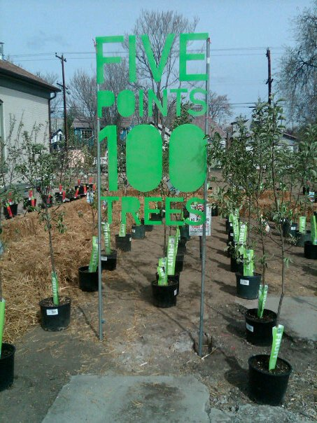Go to the Five Points 100 Trees page